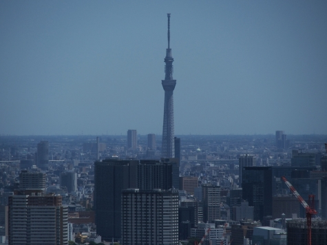 東京スカイツリー【東京都庁より】