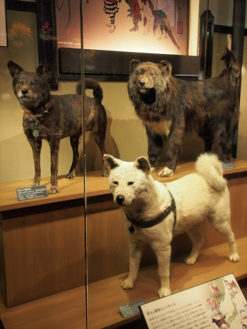 甲斐犬・カラフト犬・秋田犬【国立科学博物館】