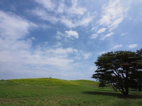 コキア【ひたち海浜公園】