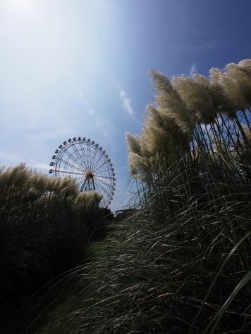 パンパグラス【ひたち海浜公園】