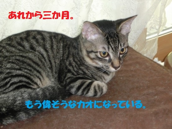 201405121755106c1.jpg