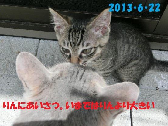 20140516-07.jpg
