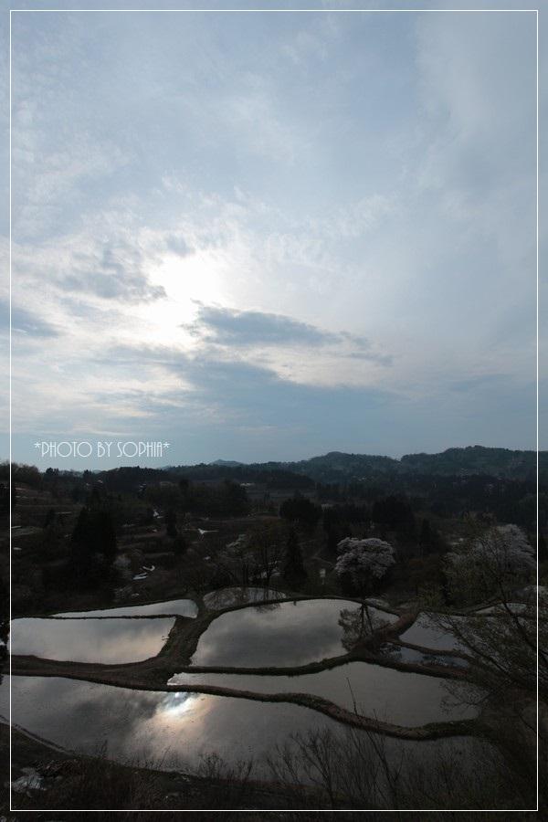 峠の棚田・桜