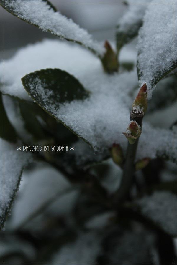 2014年2月8日・雪