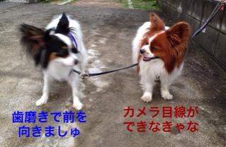 fc2blog_20140711201854f88.jpg