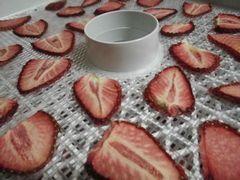 [写真]スライスしたイチゴを乾燥しているところ