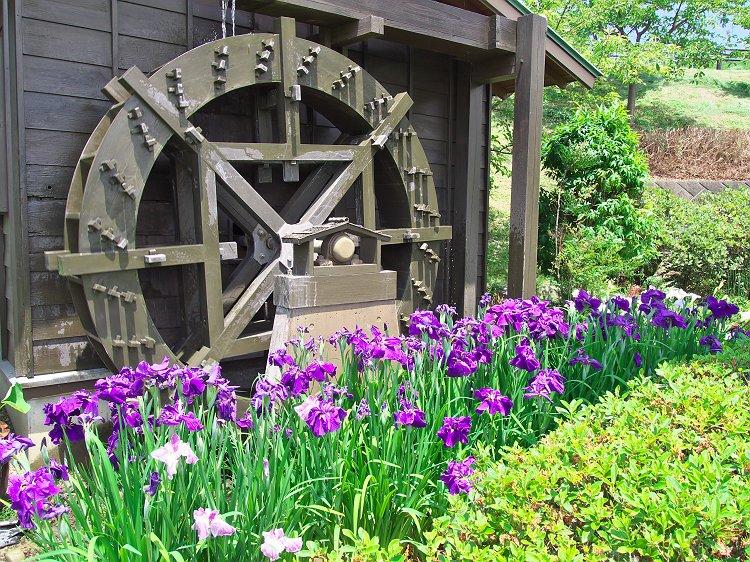 紫陽花・菖蒲が咲く公園