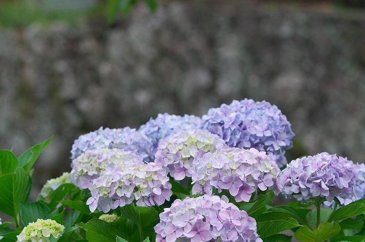 花沢の里 初夏 2