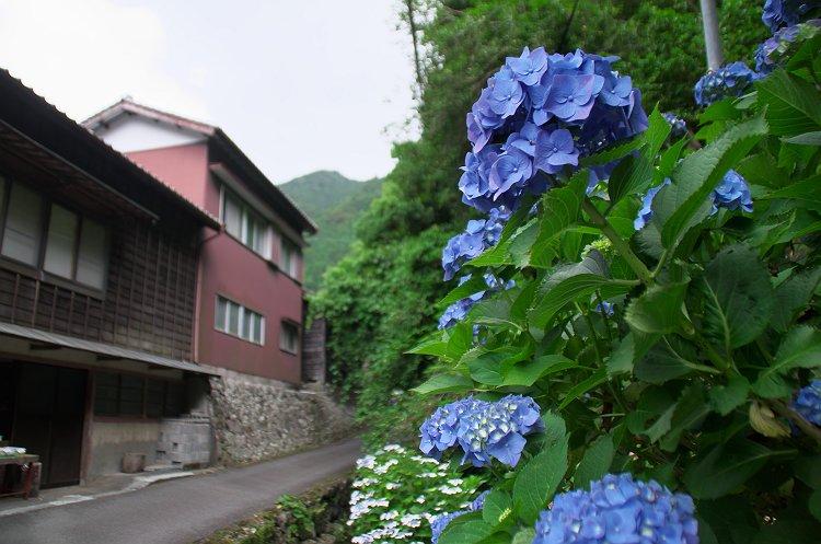 花沢の里 初夏 3