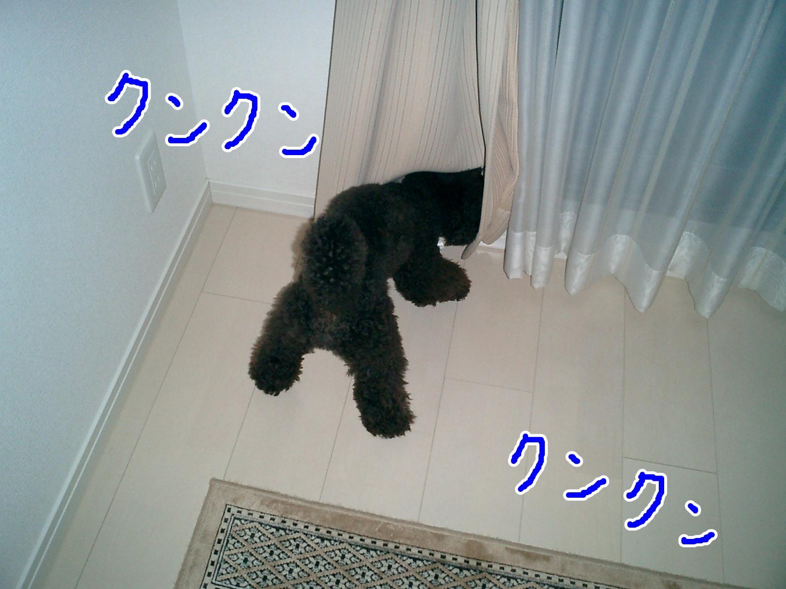 CIMG0158.jpg