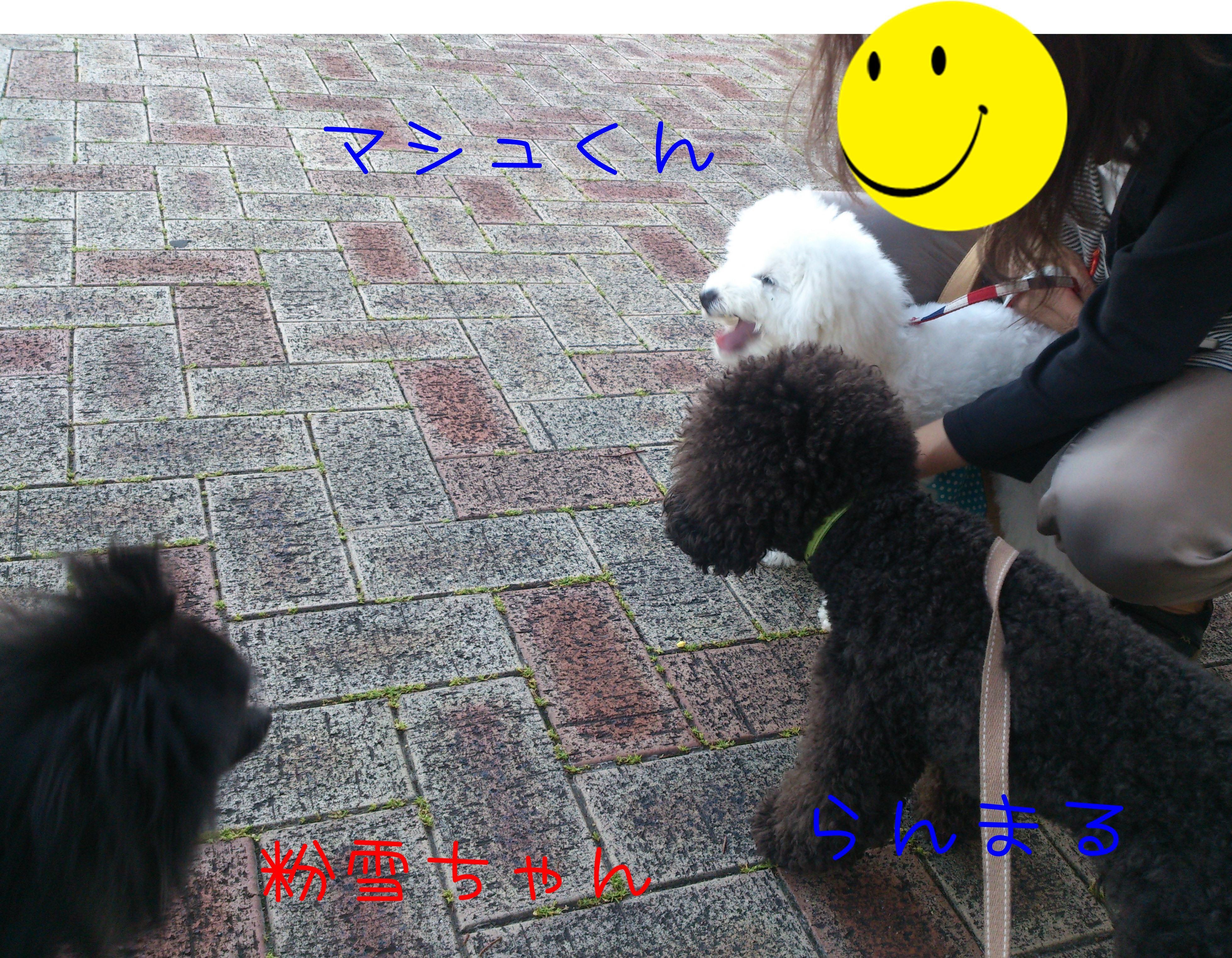 DSC_0591_convert_20140529141829.jpg