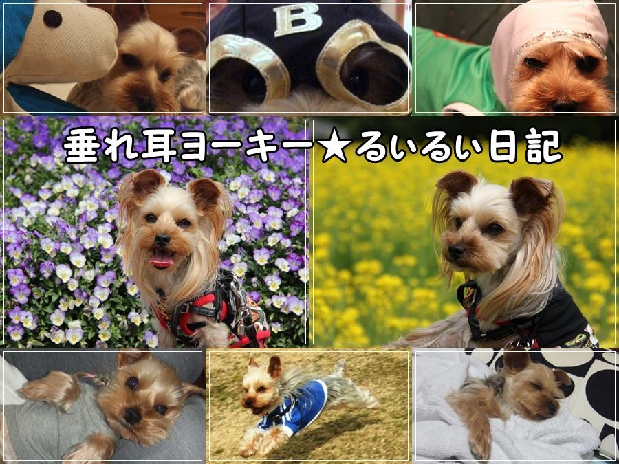 ★菜の花テンプレ