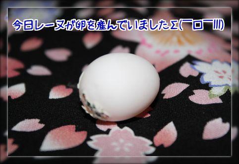 201404132158259e4.jpg