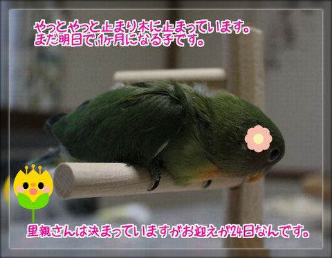 2014041322365482f.png