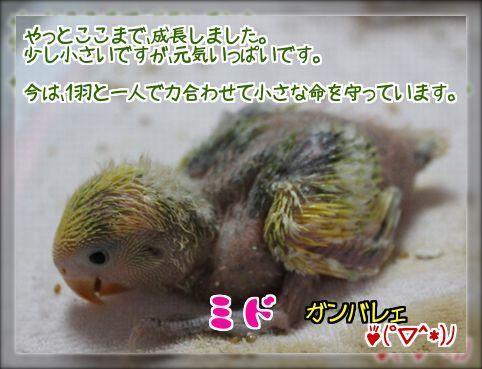 20140802173808784.jpg