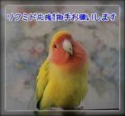 20140802234113854.jpg