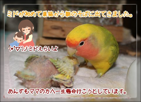 20140803210742983.png