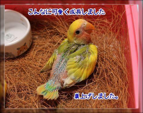 20140809214421ea3.jpg