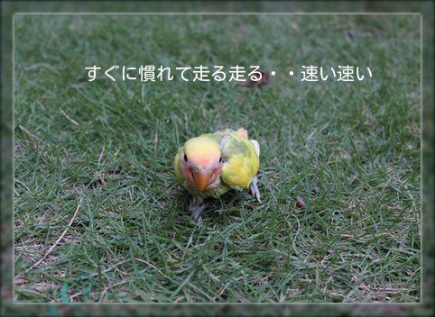 20140813204330f4f.jpg