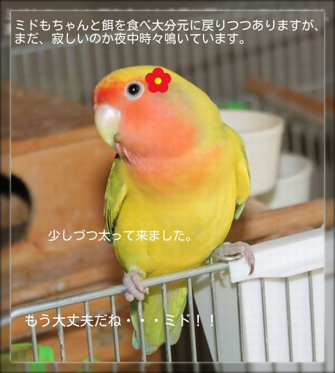 20140818150114674.png