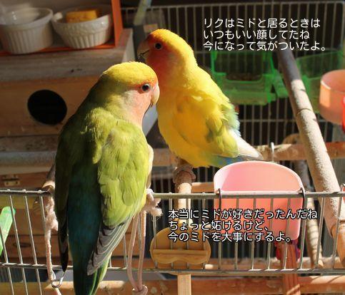 20140830200816fdc.jpg