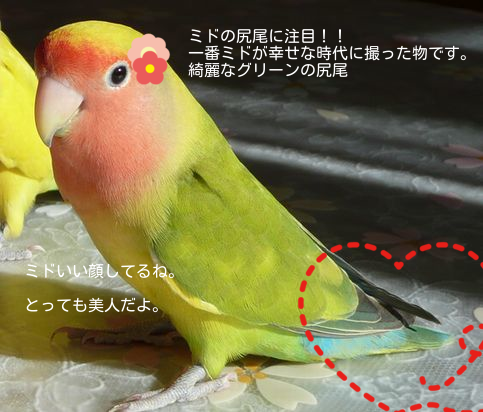 20140905180257377.png