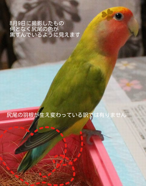201409051803011fc.png