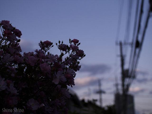 ShinoFc2_140518.jpg