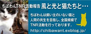 2013TNR_320x120.jpg