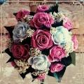 studio.rose