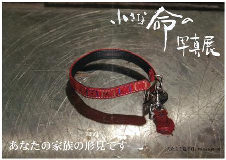 広島市動物管理センターからのお知らせ:29日まで固定