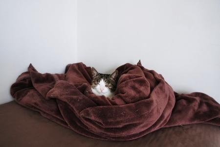 ミルラの毛布はアタシの毛布