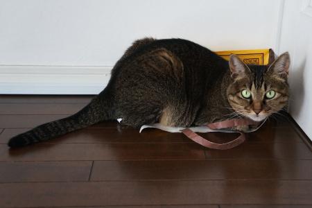 猫の楽しみを邪魔するな