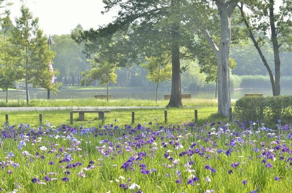 朝の水元公園