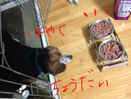 fc2blog_2014040323212459a.jpg