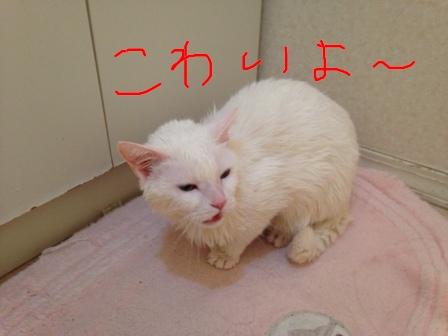 fc2blog_2014041311074581d.jpg