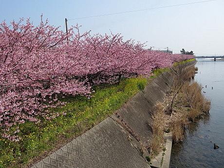 kawazu26.jpg